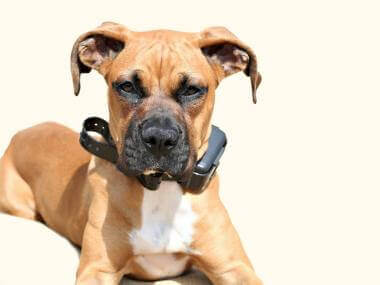 Should You Use an E-Collar to Train Your Dog?