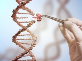 How Did Scientists Edit the Genes of Human Embryos?